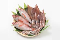 ハルタの鮮魚